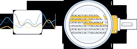 lupa investigando DNA